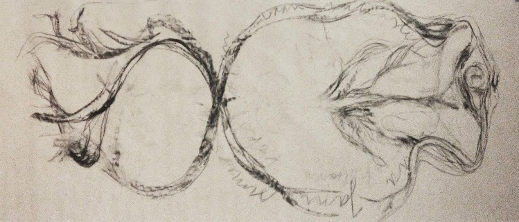 ritual work, Jenny 27.7.2016, charcoal on paper, 450x100cm